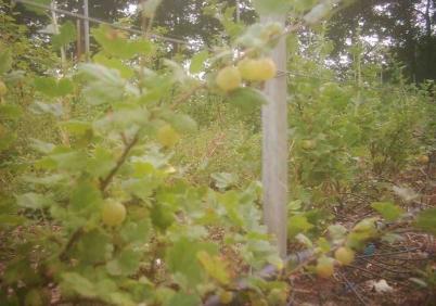 fruittuin